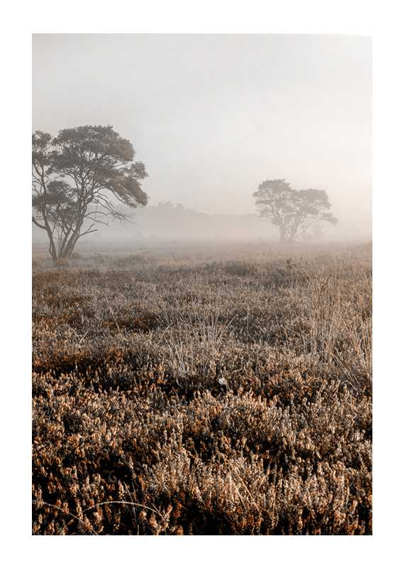 Autumn Field-1
