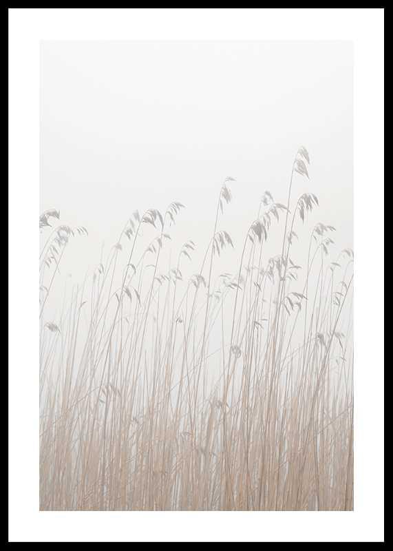 Grass In Fog