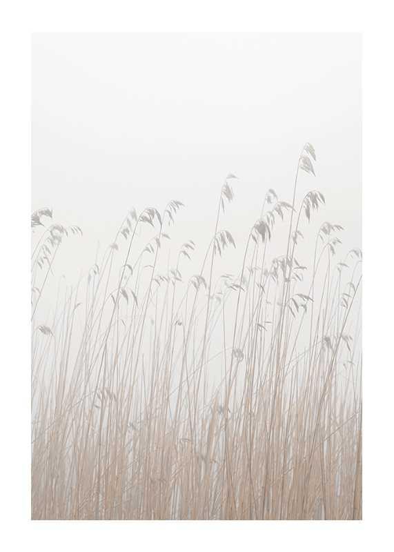 Grass In Fog-1