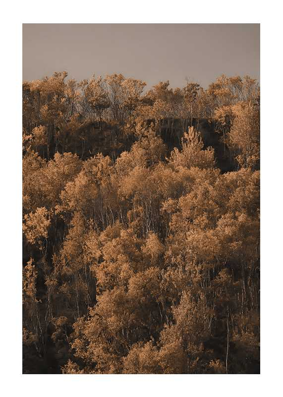 Autumn Colored-1
