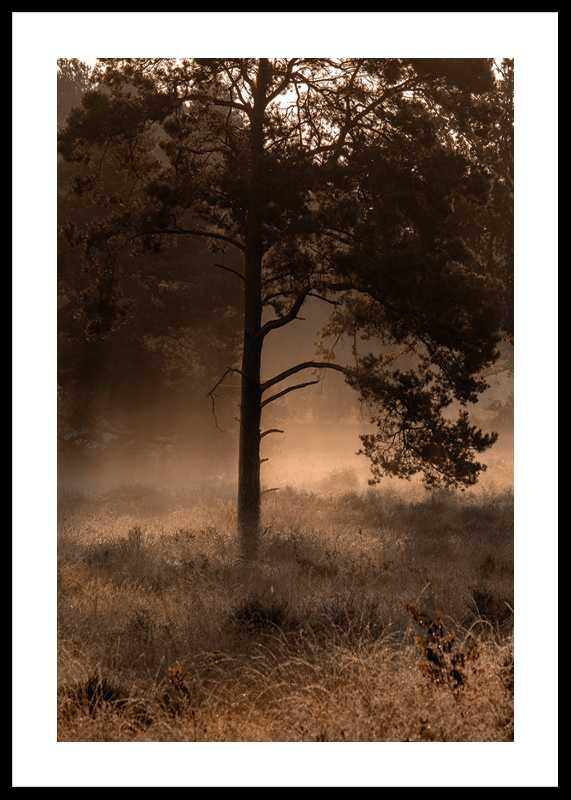 Field In Fog