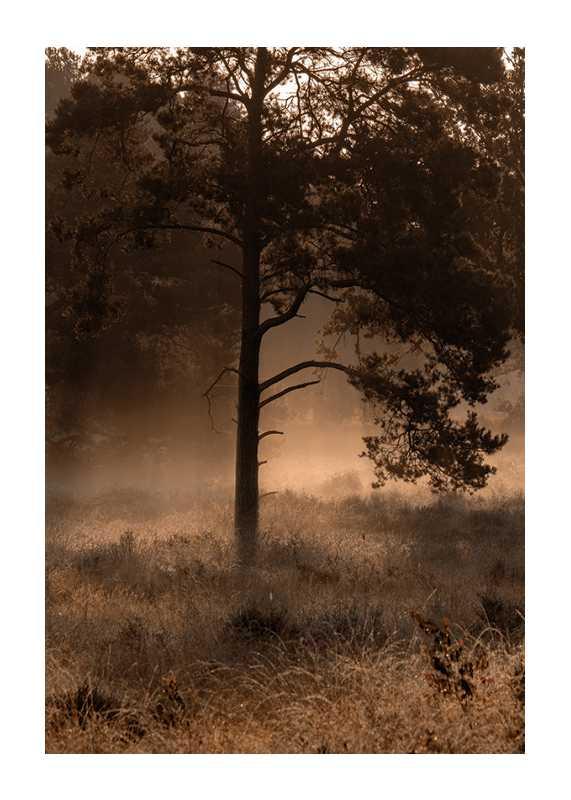 Field In Fog-1