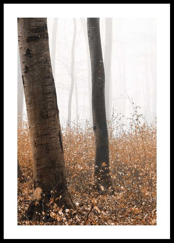 Forest Ground-0