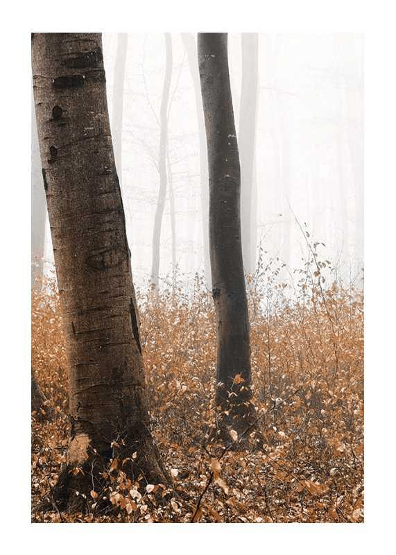 Forest Ground-1